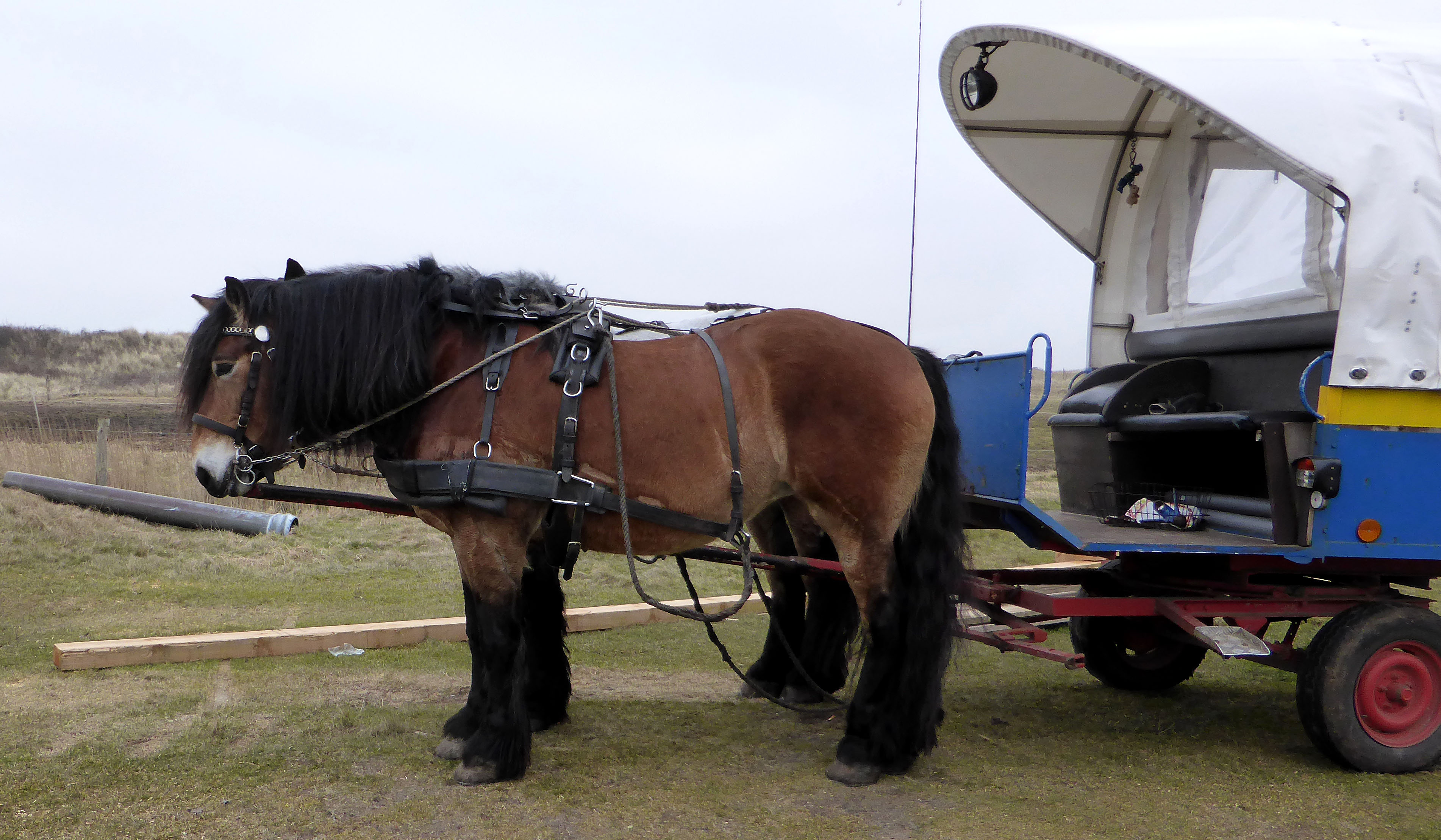 juist-pferdetaxi