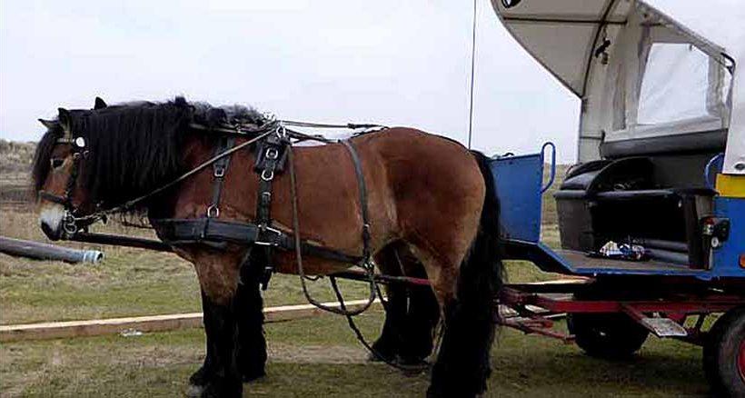 Auf Juist bewegt sich man sich zu Fuß, mit dem Rad oder mit dem Pferdetaxi