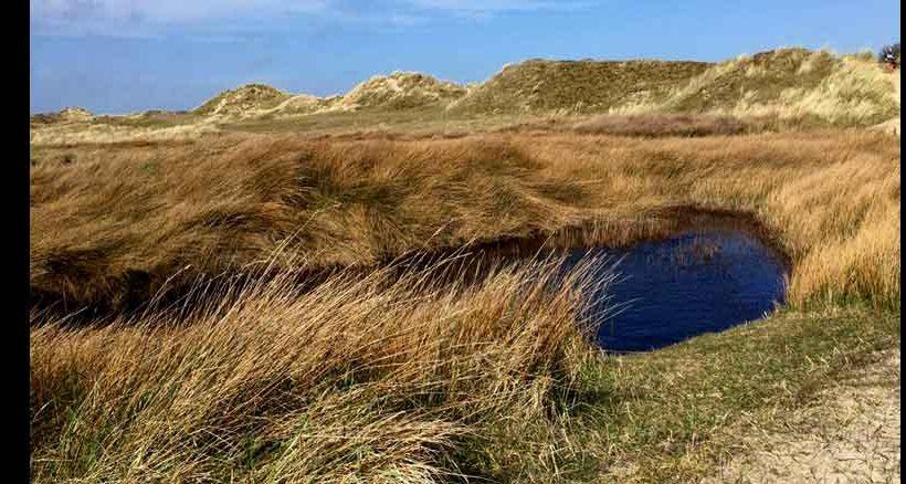 Die Dünenlandschaft bietet sich für lange Spaziergänge an.