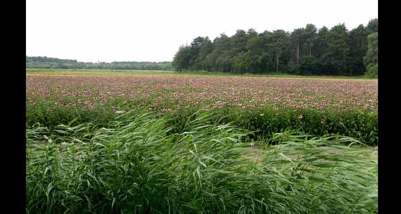 Wald und Wiesen, auch das ist Texel