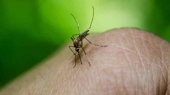 Wir lieben den Sommer aber nicht die fiesen Mückenstiche. Wir haben die besten Hausmittel dagegen zusammengetragen.